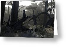 Brooding Forest Greeting Card