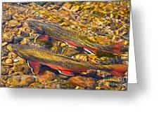 Brook Trout Greeting Card