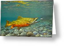 Brook Trout And Coachman Wet Fly Greeting Card