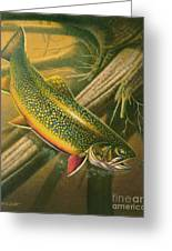Brook Trout  Hideaway Greeting Card