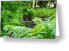 Brook Waterfall Greeting Card