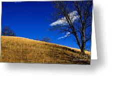 Broomsedge On Hill Greeting Card
