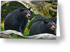 Brothers Bear Greeting Card