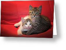 Brothers Kittens Greeting Card