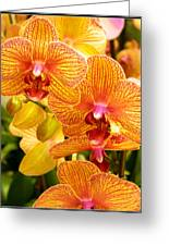 Smiling Brown And Pink Orchids Greeting Card