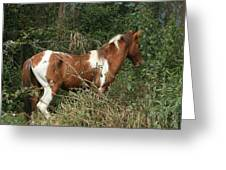 Brown And White Horse Standing In A Forest Greeting Card
