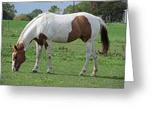 Brown And White Painted Horse Greeting Card