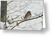Brown And White Speckled Bird On Snowy Limb Greeting Card