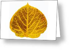 Brown And Yellow Aspen Leaf 2 Greeting Card