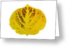 Brown And Yellow Aspen Leaf 3 Greeting Card