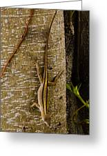 Brown Anole Lizard In Florida Greeting Card