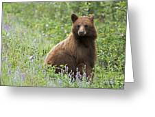 Canadian Bear Greeting Card