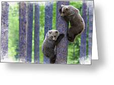 Brown Bear Climbing Lesson Greeting Card