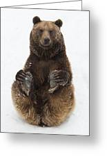 Brown Bear Holding Its Paws Germany Greeting Card