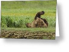 Brown Bear Picture 37 Greeting Card