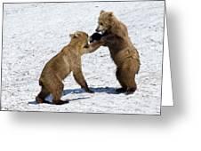 Brown Bear Ursus Arctos Cubs Play Greeting Card