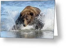 Brown Bear, Ursus Arctos, Fishing Greeting Card