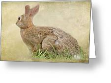 Brown Bunny Greeting Card