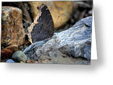 Brown Butterfly Cuyahoga Valley Greeting Card