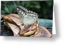 Brown Clipper Butterfly #3 Greeting Card
