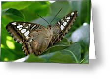 Brown Clipper Greeting Card
