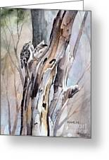 Brown Creeper Greeting Card