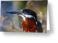 Brown Crested Kingfisher Greeting Card