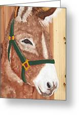 Brown Donkey On Cedar Greeting Card