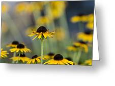 Brown Eyed Susans On Yellow And Green Greeting Card