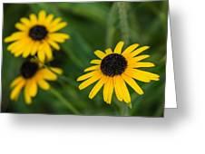 Brown Eyed Susans Greeting Card
