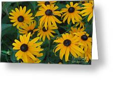 Brown Eyed Susans Greeting Card