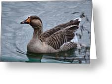 Brown Feathered Goose Greeting Card