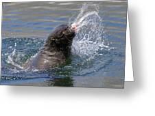 Brown Fur Seal Throwing A Fish Head Greeting Card