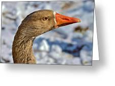 Brown Goose Greeting Card by Thomas  MacPherson Jr