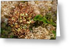 Brown Green Hydrangea Greeting Card