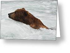 Brown Grizzly Bear Swimming  Greeting Card