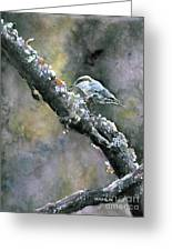 Brown-headed Nuthatch Greeting Card