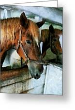 Brown Horse In Stall Greeting Card