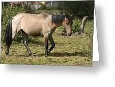 Brown Horse Walking Through A Pasture Greeting Card