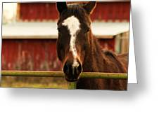 Brown Horse With Red Barn Background Greeting Card