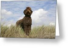 Brown Labradoodle Greeting Card
