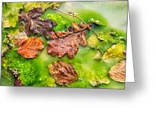 Brown Leaves In Green Pond Greeting Card