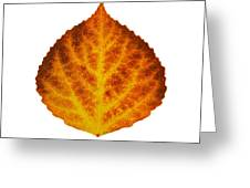 Brown Orange And Yellow Aspen Leaf 1 Greeting Card