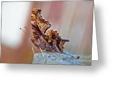 Brown Paper Moth Greeting Card