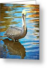 Brown Pelican Along The Bayou Greeting Card