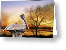 Brown Pelican At Rest Greeting Card