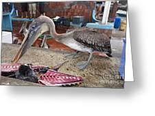 Brown Pelican At The Fish Market Greeting Card