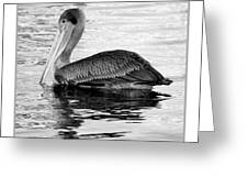 Brown Pelican - Black And White Greeting Card