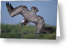 Brown Pelican Diving Academy Bay Greeting Card