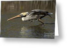 Brown Pelican Fishing Photo Greeting Card
